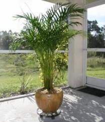 plantas-para-el-hogar-1-259x300